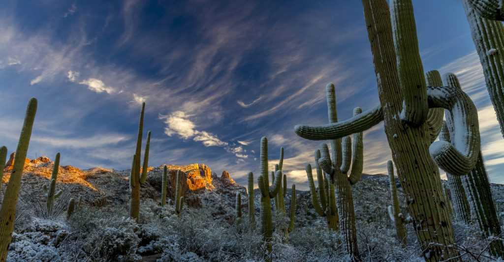 cactus winterizing