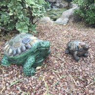 Stone Tortoise with Rocks
