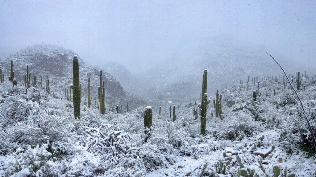 freezing Winter in sabino canyon